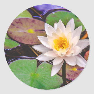 Lily pad on the water classic round sticker
