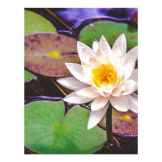 Lily pad on the water letterhead