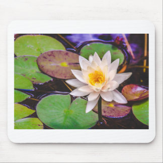 Lily pad on the water mouse pad
