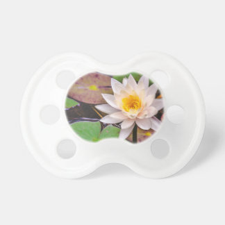 Lily pad on the water pacifier