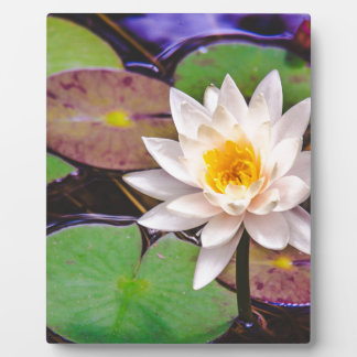Lily pad on the water plaque