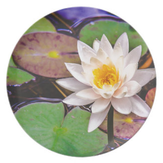 Lily pad on the water plate