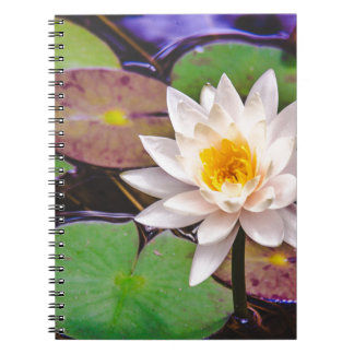 Lily pad on the water spiral notebook