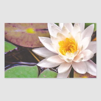 Lily pad on the water sticker