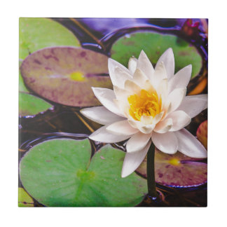 Lily pad on the water tile
