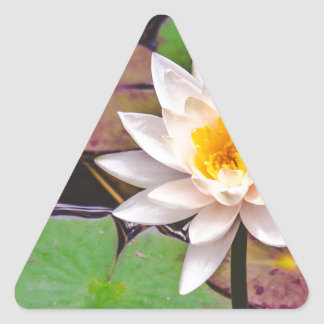 Lily pad on the water triangle sticker
