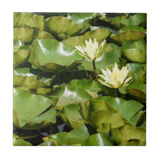Lily Pads with Blooms Ceramic Photo Tile