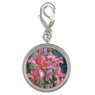 Lily Plant Outdoor Pink Charms
