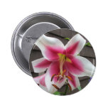 Lily Red White Plant House Pins