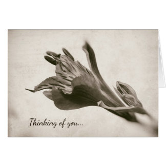 Lily Rustic Sepia Floral Thinking of You Flower Card
