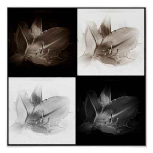 Lily Sepia and Black White Collage Print