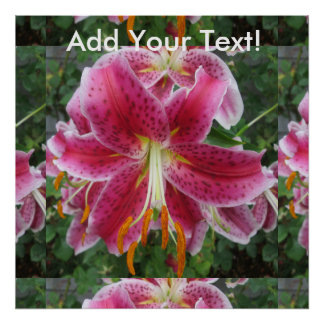 Lily Stargazer Purple Flower Poster