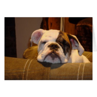 Lily the English Bulldog Puppy Card