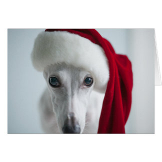 Lily The Whippet Holiday Card