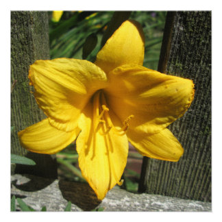 Lily Yellow Weathered Fence Invitation