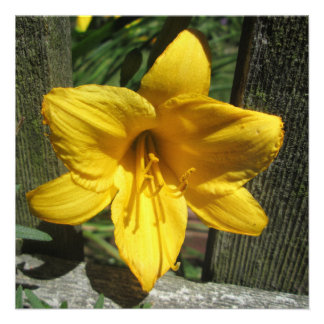 Lily Yellow Weathered Fence Custom Invites
