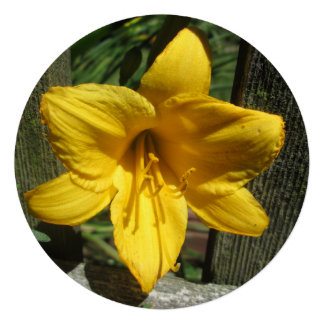 Lily Yellow Weathered Fence Announcement
