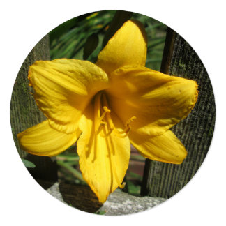 "Lily Yellow Weathered Fence 5.25"" Square Invitation Card"