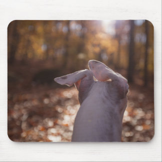 LilyTheWhippet Mousepad