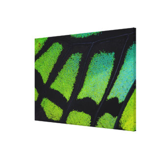 Lime green and black butterfly wing canvas print