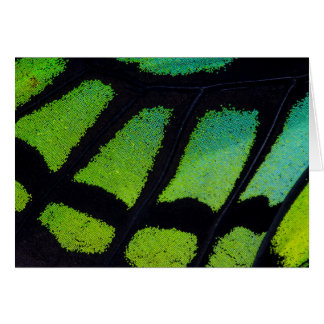 Lime green and black butterfly wing card
