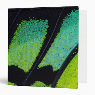 Lime green and black butterfly wing vinyl binders