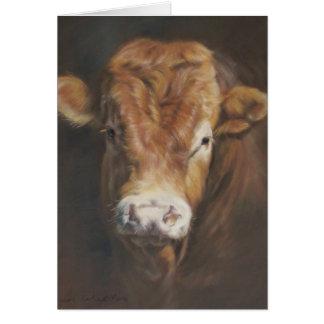 Limousin Bull Card