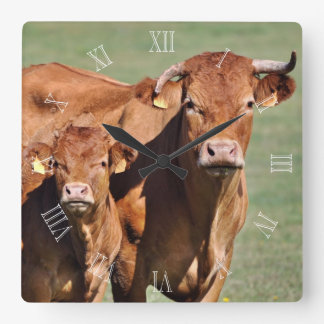 Limousin cow and calf clock with numbers