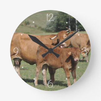 Limousin cow licking her calf round clock
