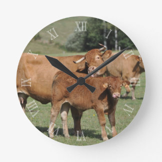 Limousin cow washing her calf round clock