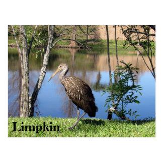 Limpkin - Learning Postcard - Florida