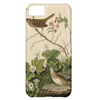 Lincoln Finch Cover For iPhone 5C
