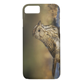 Lincoln's Sparrow, Melospiza lincolnii, adult iPhone 7 Case
