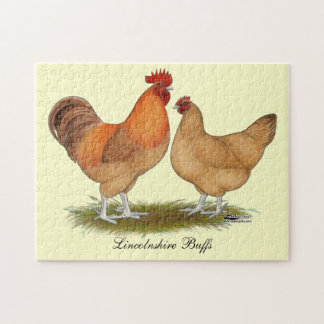 Lincolnshire Buff Chickens Puzzles