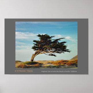 Linda Mar Cypress Poster