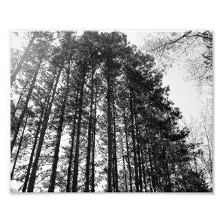 Line of Trees Photo Art