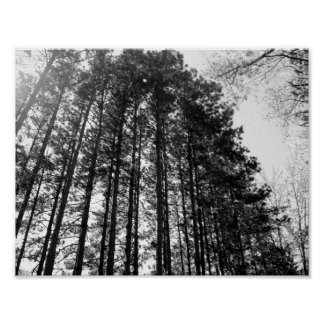 Line of Trees Poster