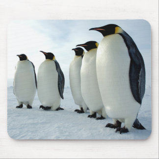 Lined up Emperor Penguins Mouse Pad