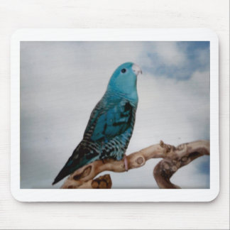 Lineolated Parakeet Mouse Pad