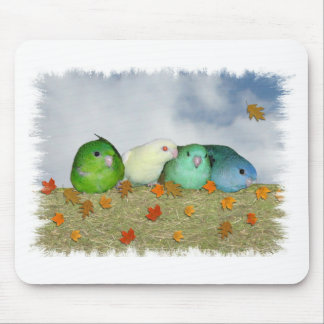 Lineolated parakeets mouse pad