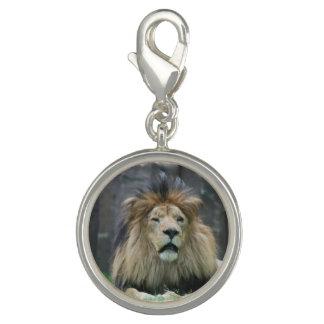 lion-69 photo charms