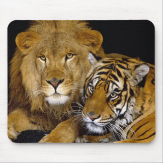 lion and a tiger mouse pad