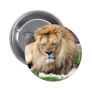 Lion Around 2 Inch Round Button
