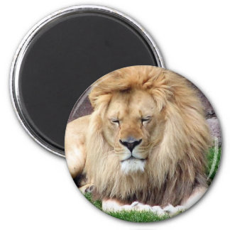 Lion Around 2 Inch Round Magnet