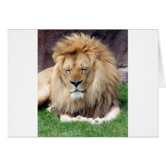 Lion Around Card