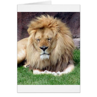 Lion Around Greeting Card