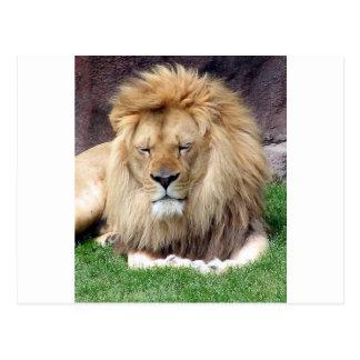 Lion Around Post Card