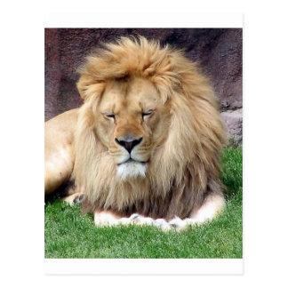 Lion Around Postcard