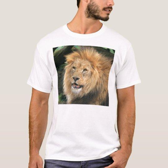 lion beautiful portrait unisex mens ladies t-shirt