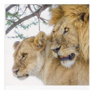 Lion Couple Acrylic Wall Art